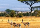 《BBC纪录片 非洲》